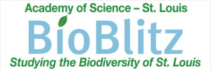 BB Logo studying the Biodiversity of St. Louis